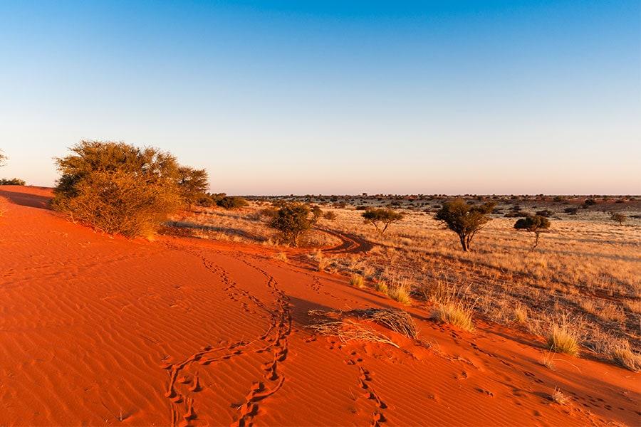 kalahari-wueste-botswana