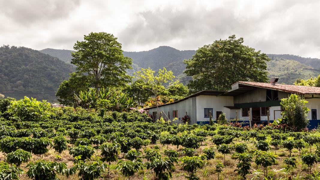 gruppenreise-costa-rica-karibik-kaffeeplantage