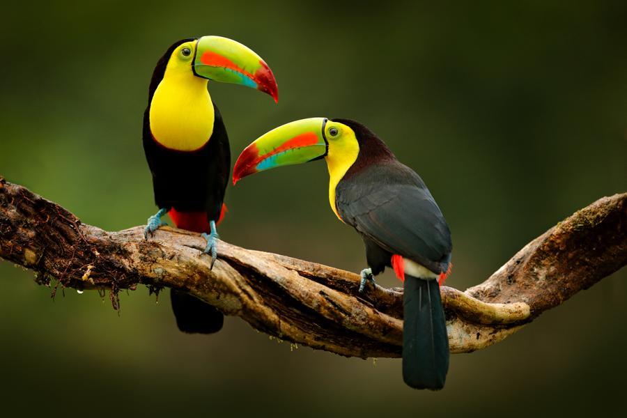 gruppenreise-costa-rica-tukane