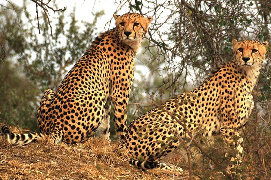 kruger-national-park-suedafrika