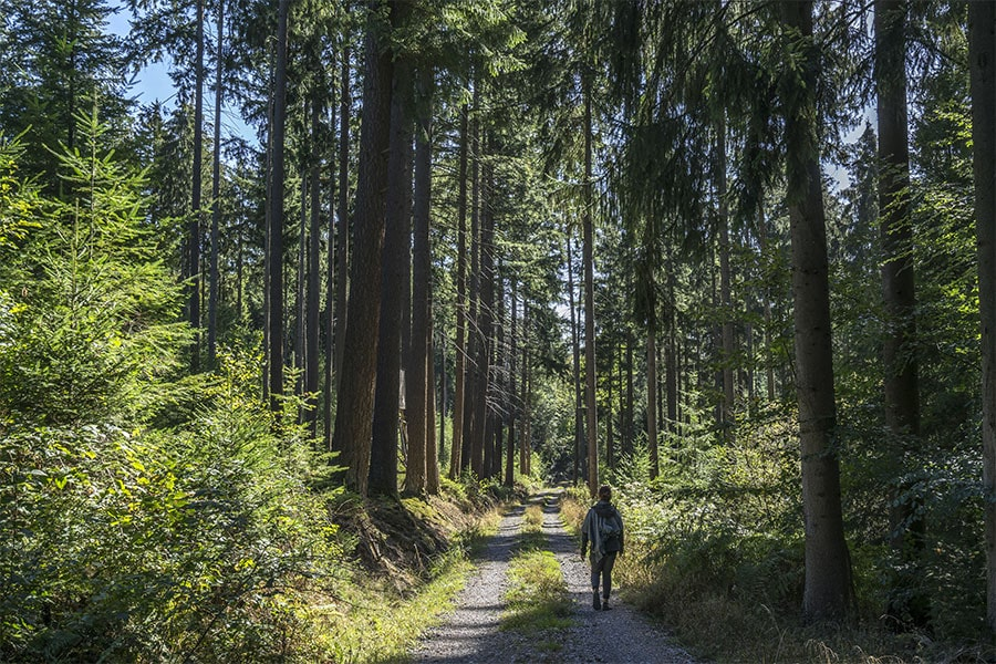 meditatives-wandern-odenwald