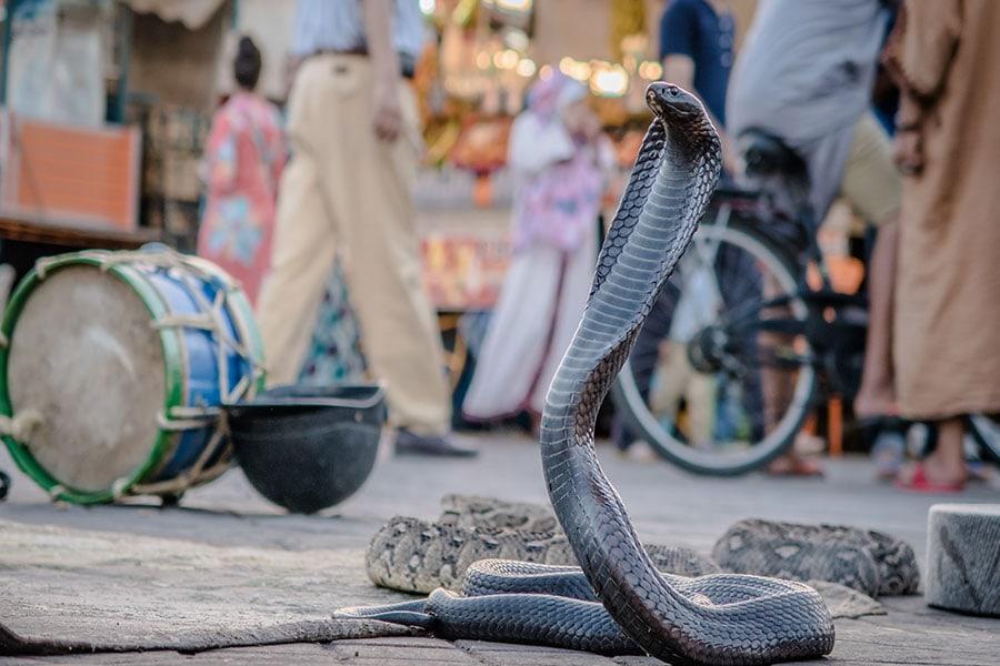 schlangenbeschwoerer-jema-el-fnaa-marokko